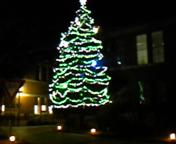 大学のツリー
